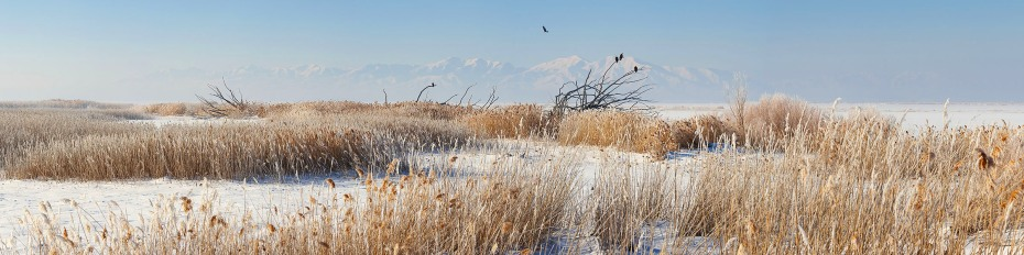 Eagle flies over Farmington Bay, Utah