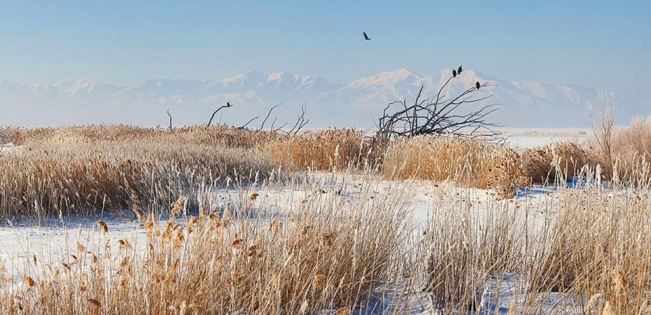 Eagle flies over Farmington Bay, Utah