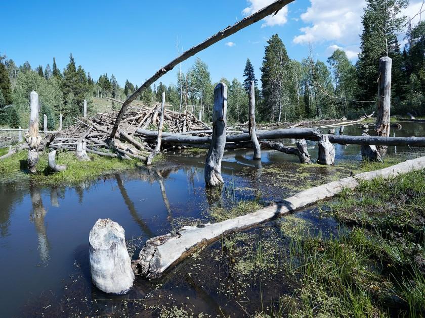 bear-lake-2016-1842